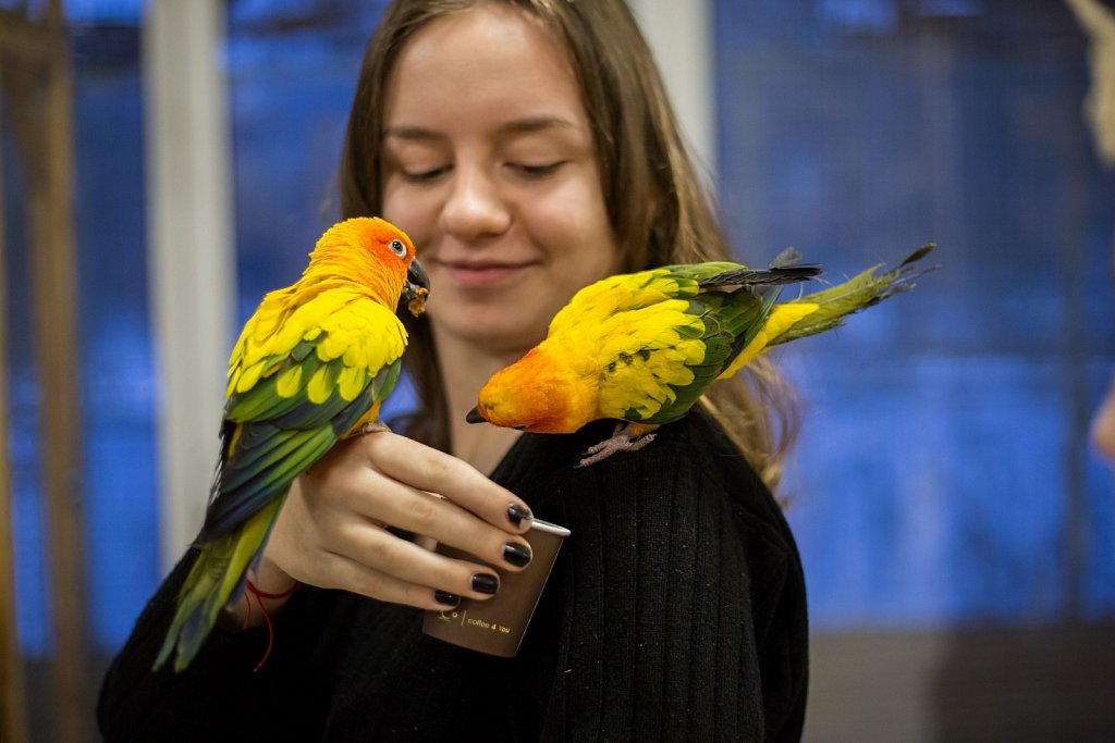 Papugarnia Gdańsk